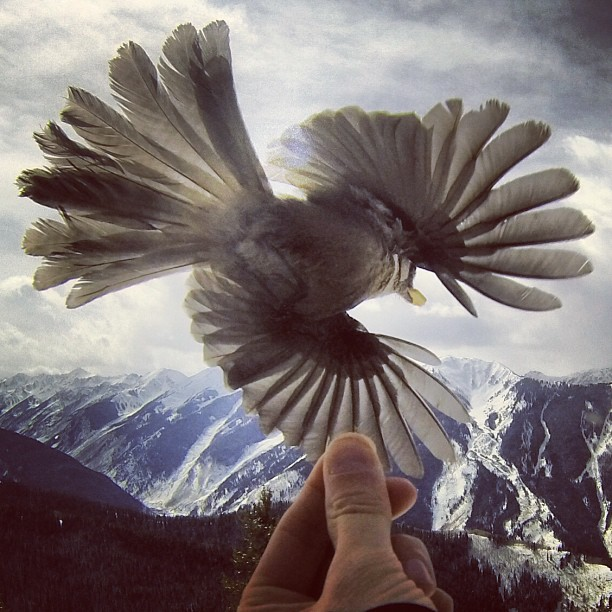 aspensnowmass Put a bird on it! #freeskierfest
