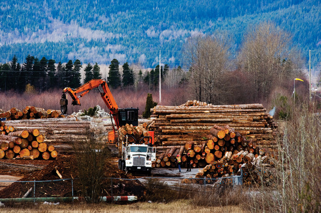 Logging in Northern BC