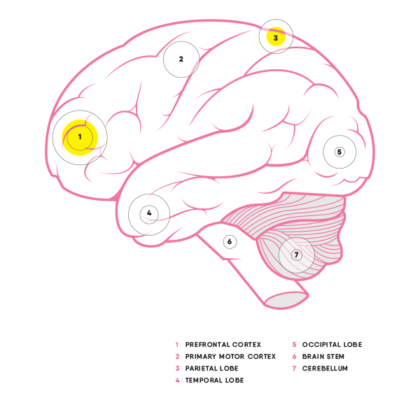 nobrainnogain_brain